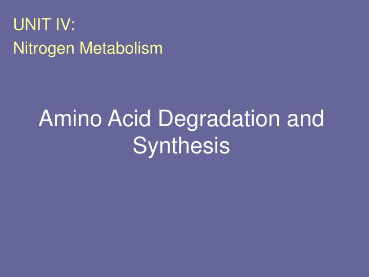 amino acid degradation and synthesis n.