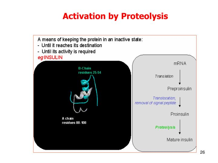 Activation by Proteolysis