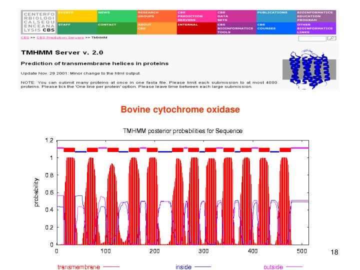 Bovine cytochrome oxidase