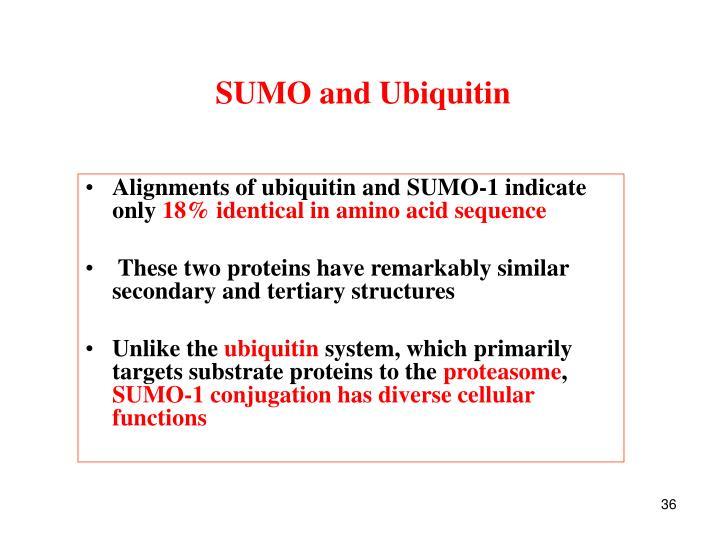 SUMO and Ubiquitin