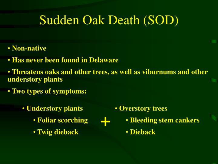 Sudden Oak Death (SOD)