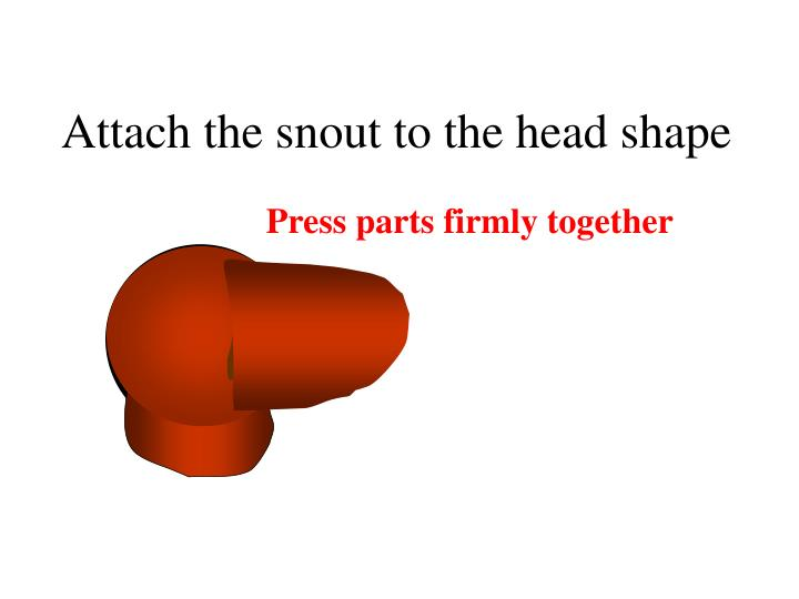 Attach the snout to the head shape