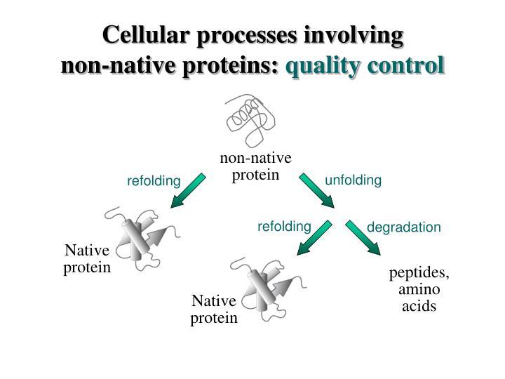 Cellular processes involving