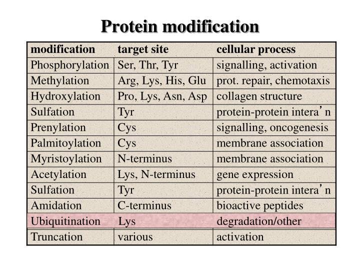 Protein modification