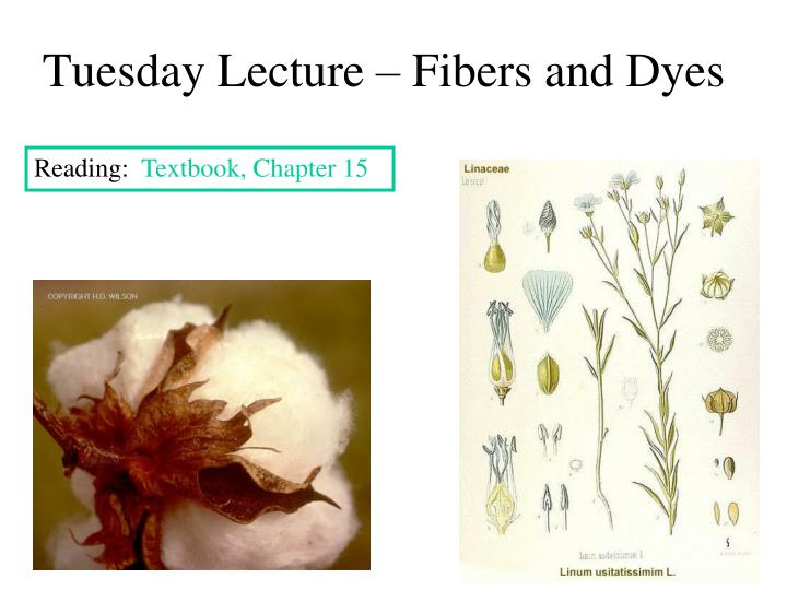 Tuesday lecture fibers and dyes
