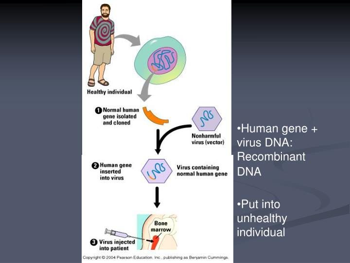Human gene +