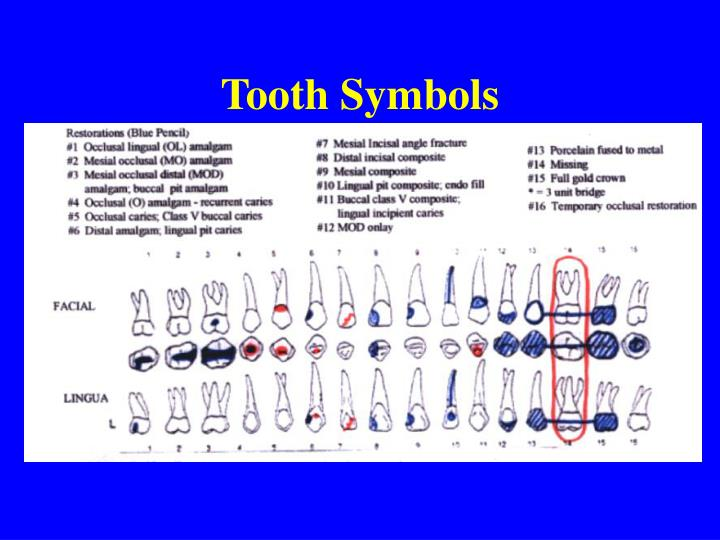 Ppt Dental Charting Powerpoint Presentation Id1282644