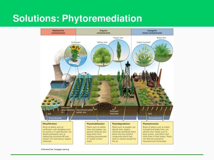 Solutions: Phytoremediation