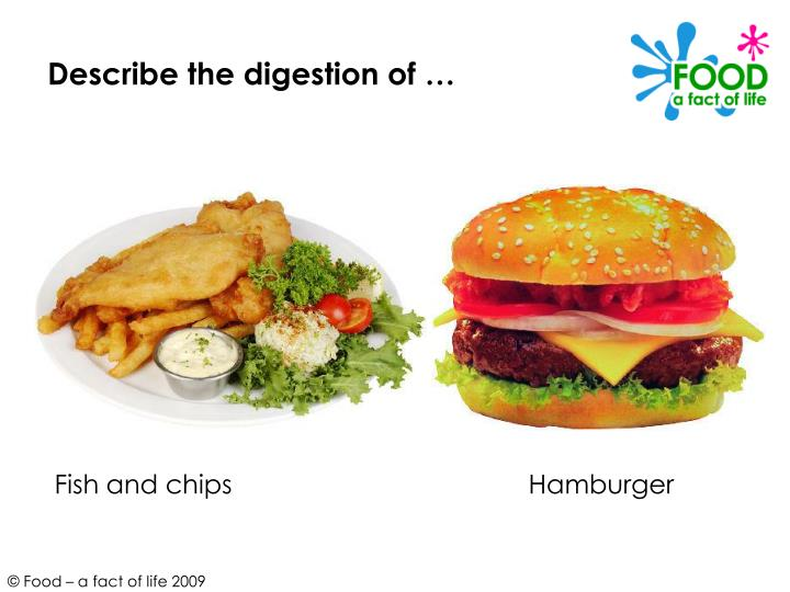 Describe the digestion of …