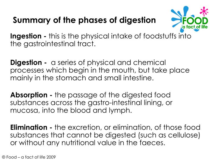 Summary of the phases of digestion