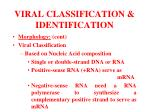 viral classification identification6