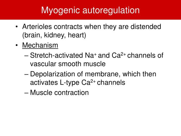 Myogenic autoregulation