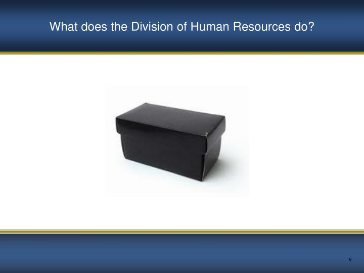What does the Division of Human Resources do?