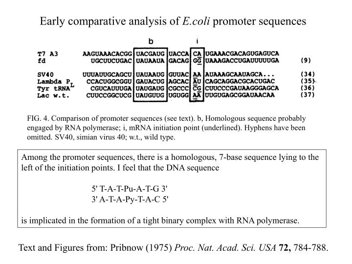 Early comparative analysis of e coli promoter sequences