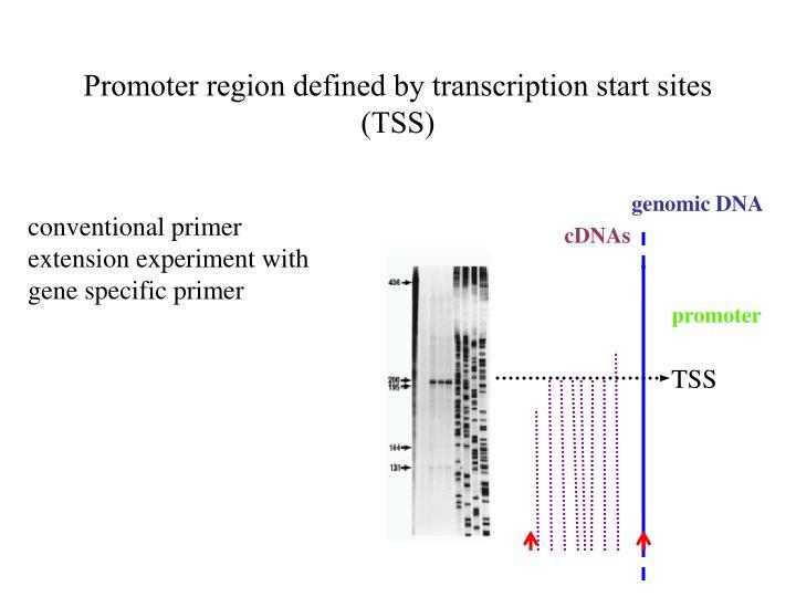 Promoter region defined by transcription start sites (TSS)