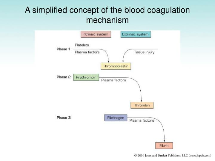 A simplified concept of the blood coagulation mechanism