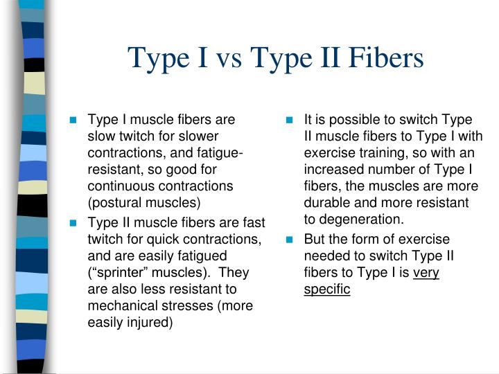 Type I muscle fibers are slow twitch for slower contractions, and fatigue-resistant, so good for continuous contractions (postural muscles)