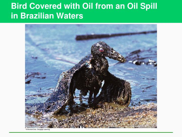 Bird Covered with Oil from an Oil Spill
