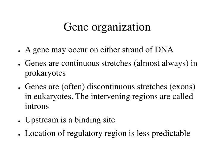 Gene organization