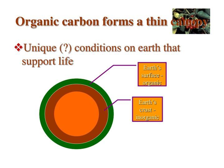 Organic carbon forms a thin canopy