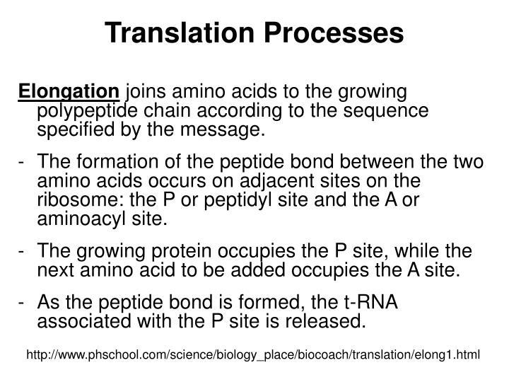 Translation Processes