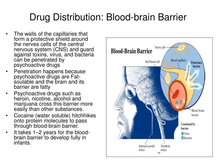 Drug Distribution: Blood-brain Barrier