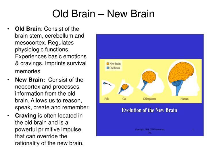 Old Brain – New Brain