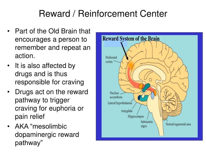 Reward / Reinforcement Center