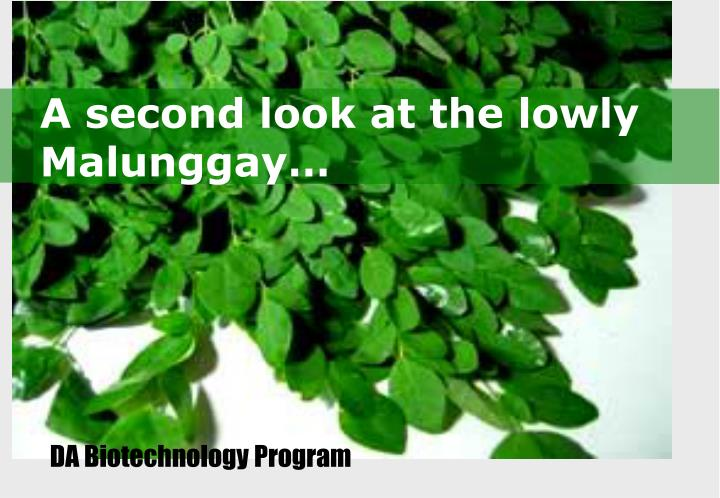 A second look at the lowly malunggay