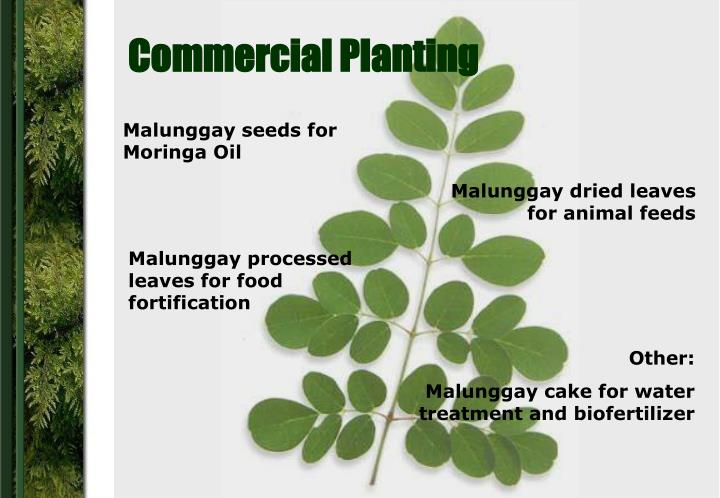Commercial Planting
