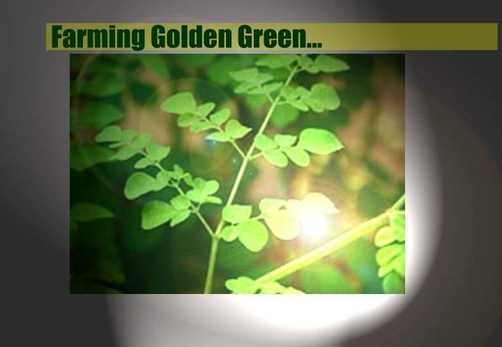 Farming Golden Green…