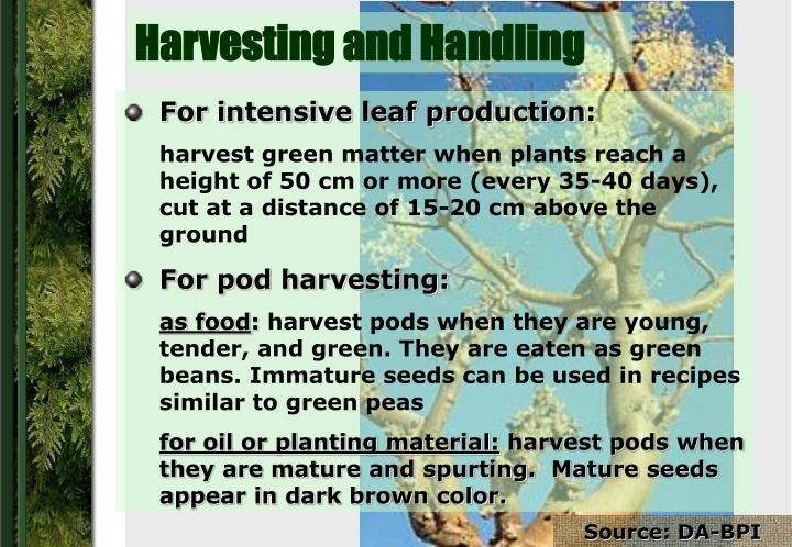 Harvesting and Handling