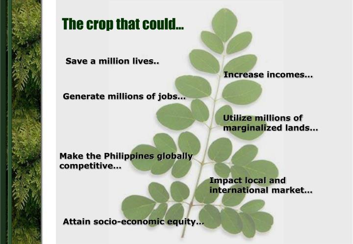 The crop that could…