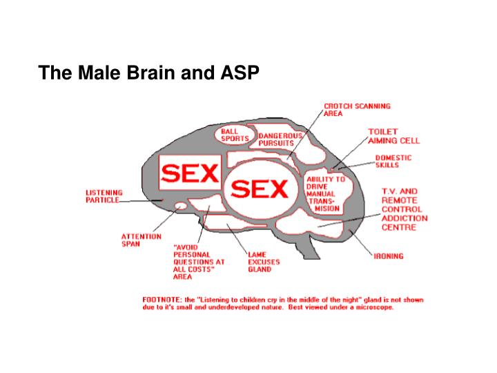 The Male Brain and ASP
