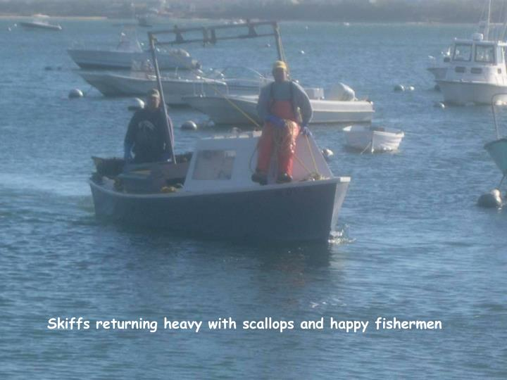 Skiffs returning heavy with scallops and happy fishermen