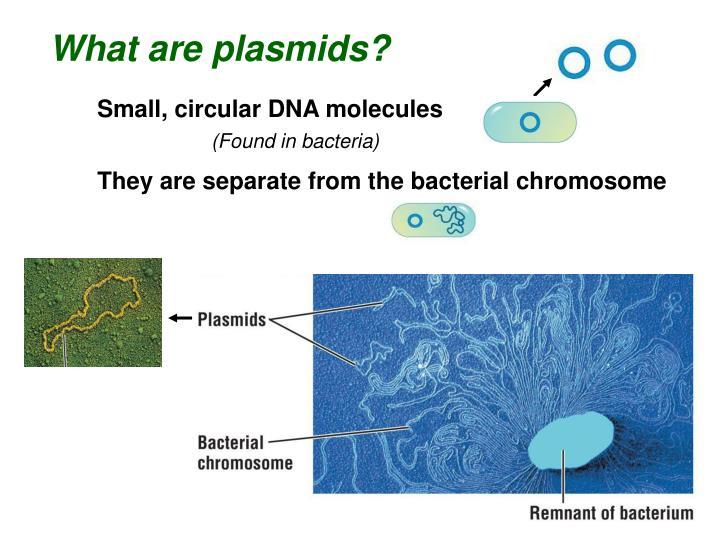 What are plasmids?
