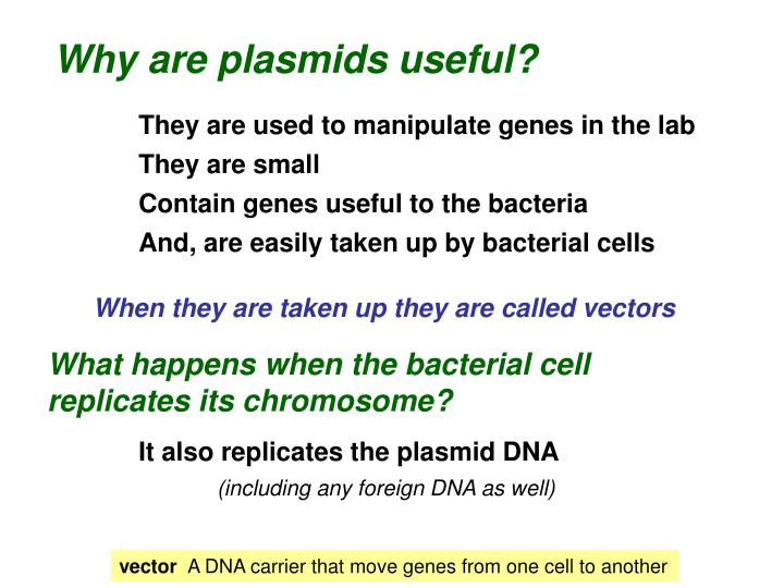 Why are plasmids useful?