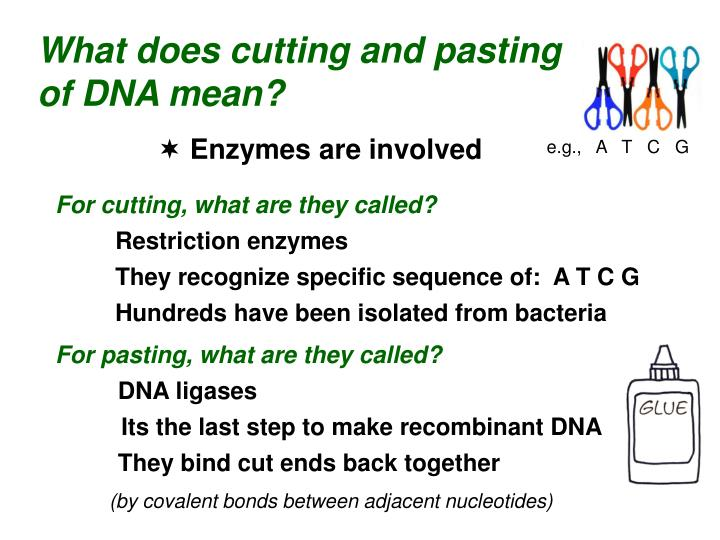 What does cutting and pasting of DNA mean?