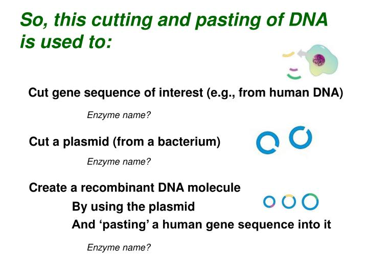 So, this cutting and pasting of DNA is used to: