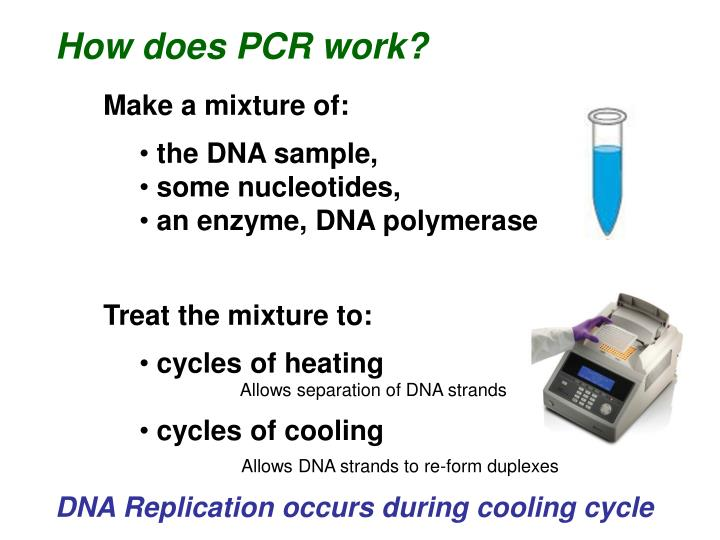 How does PCR work?