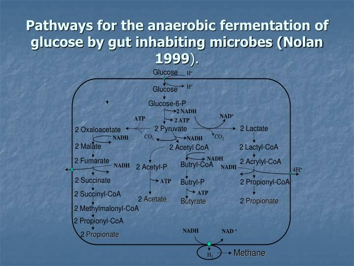 Pathways for the anaerobic fermentation of glucose by gut inhabiting microbes (Nolan 1999