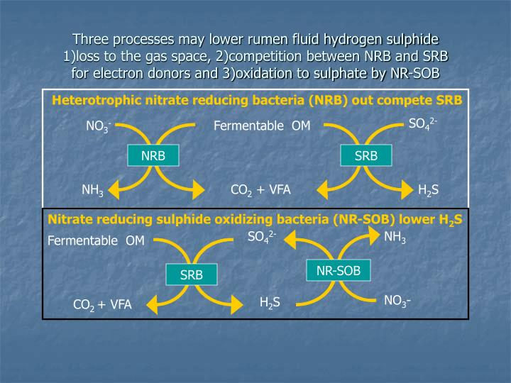Three processes may lower rumen fluid hydrogen sulphide