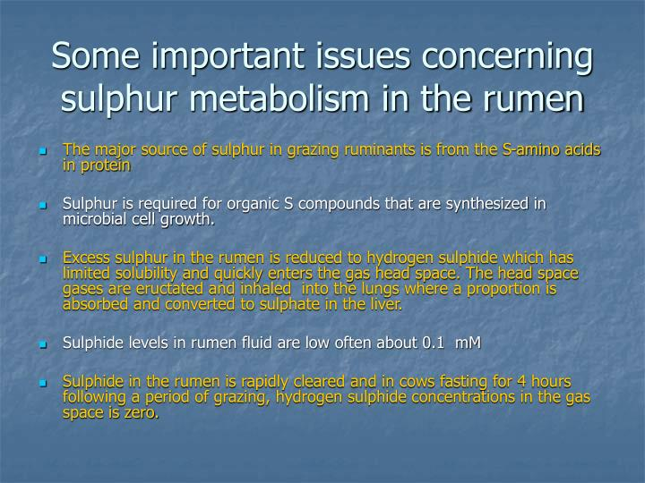 Some important issues concerning sulphur metabolism in the rumen