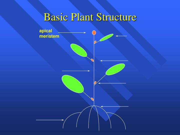 Basic plant structure1