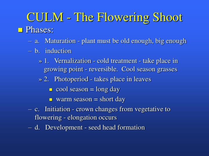 CULM - The Flowering Shoot