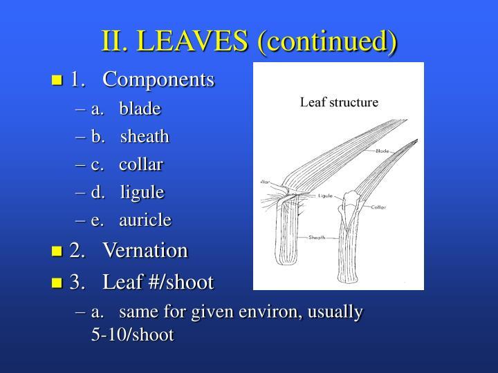 II. LEAVES (continued)