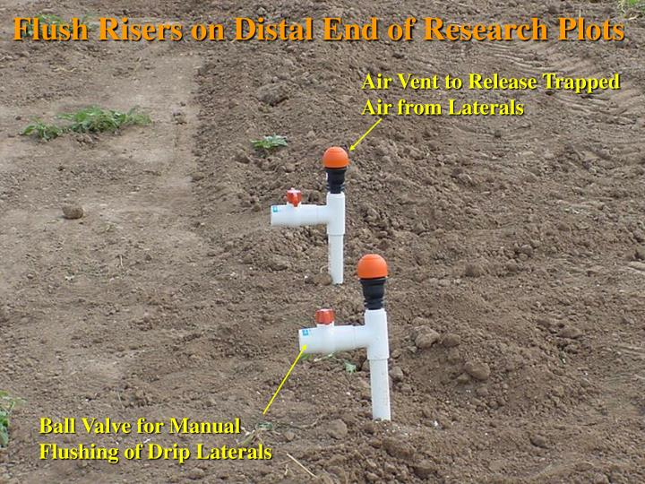 Flush Risers on Distal End of Research Plots