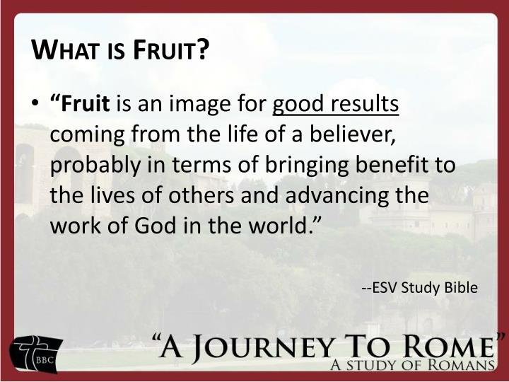 What is Fruit?