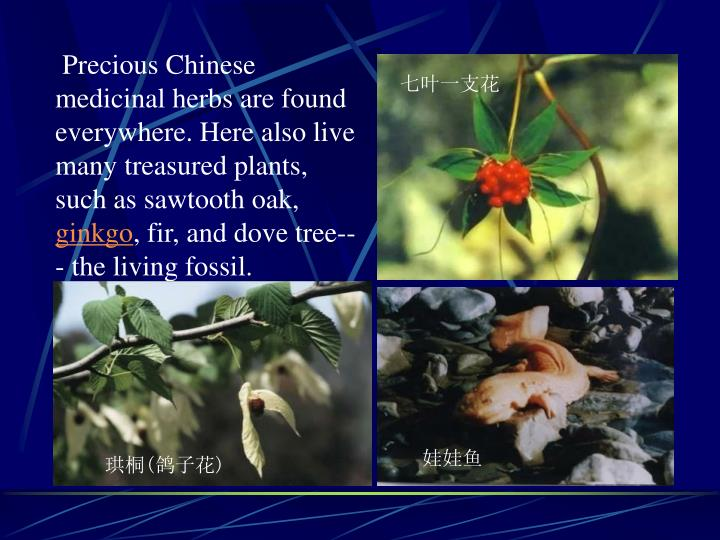 Precious Chinese medicinal herbs are found everywhere. Here also live many treasured plants, such as sawtooth oak,