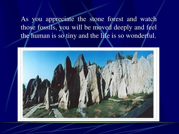 As you appreciate the stone forest and watch those fossils, you will be moved deeply and feel the human is so tiny and the life is so wonderful.